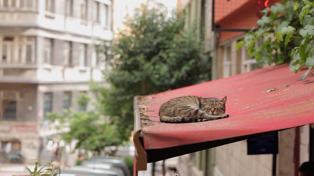Los gatos habitan cada rincón de Estambul