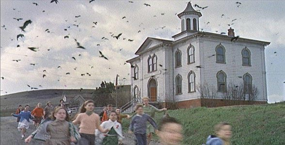 Los pájaros. Fuente: Cinemanía.com