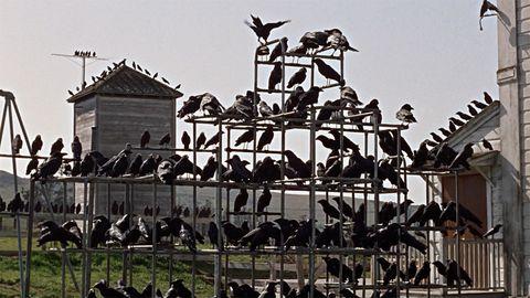 Los pájaros. Fuente: Fotogramas.com